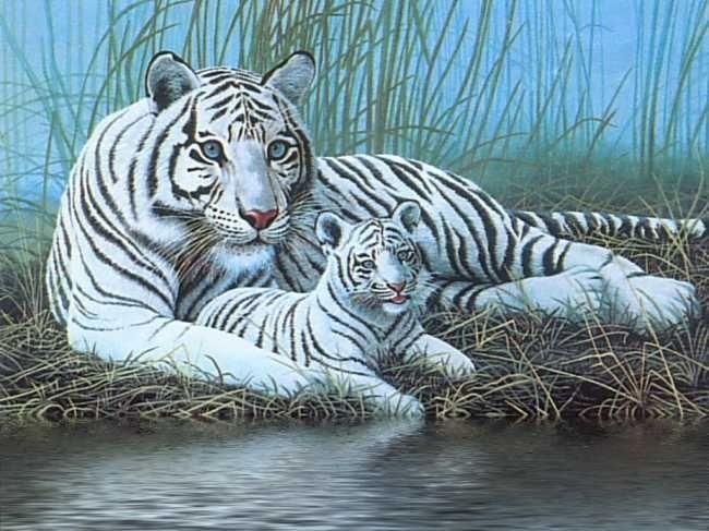 Sibirischer Tiger Ideen Auf tatowierung Bilder Pinterest | Tiger Tattoo - Tatowierung Bilder