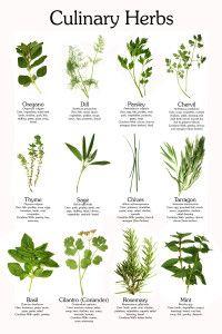 Jedlé bylinky