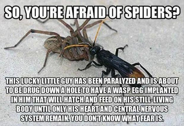 I saw this scenario play out in the middle of the desert in Arizona. It was amazing. Had to pin this when I saw it.