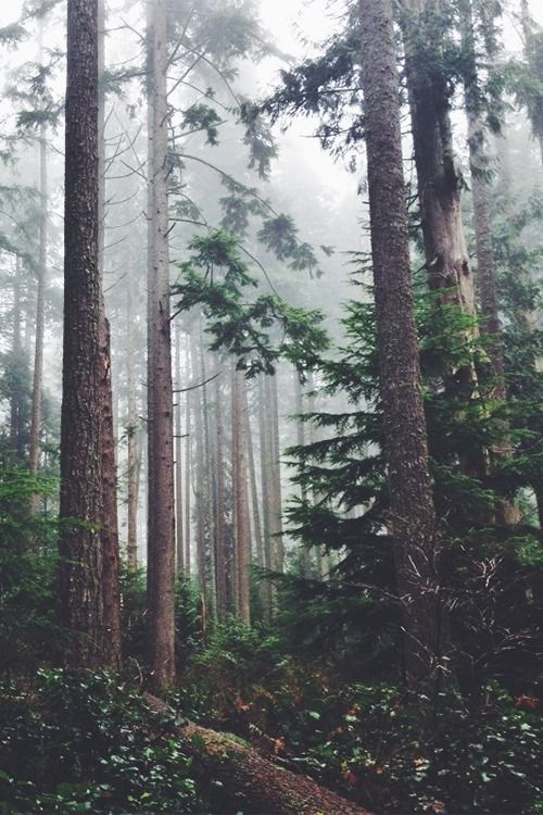 Foggy woods/forest