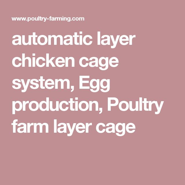 automatic layer chicken cage system, Egg production, Poultry farm layer cage