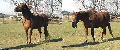 Why I Don't Do Natural Horsemanship Anymore