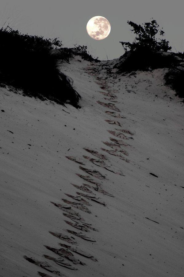 path: Beautiful Moon, Full Moon, Night, Beach, Photo, Moonlight, The Moon