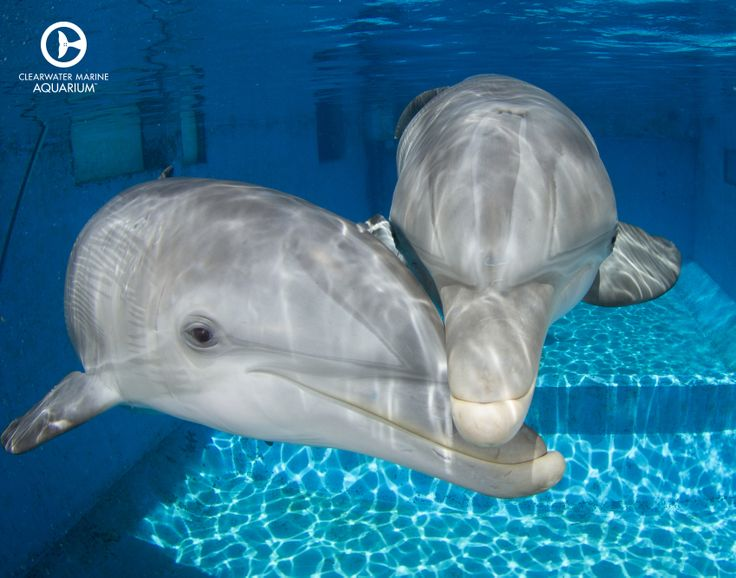 Winter the dolphin with Hope the dolphin cuddling!