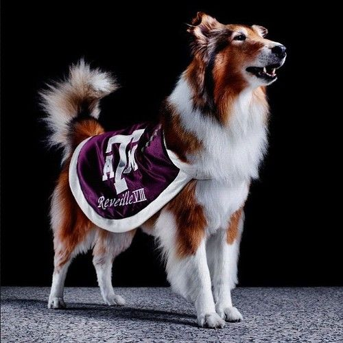 WHOOP! picture from espn the magazine's college football preview (august 20, 2012) #TexasA #Aggies #Reveille
