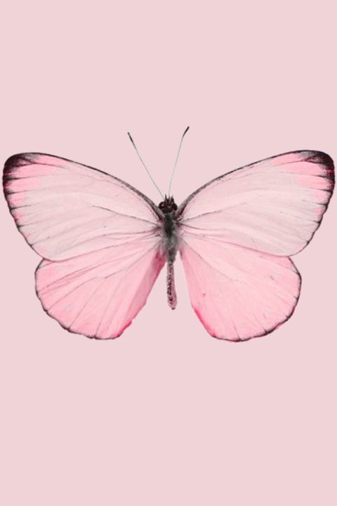 Pastel Pink Butterfly                                                                                                                                                     Más