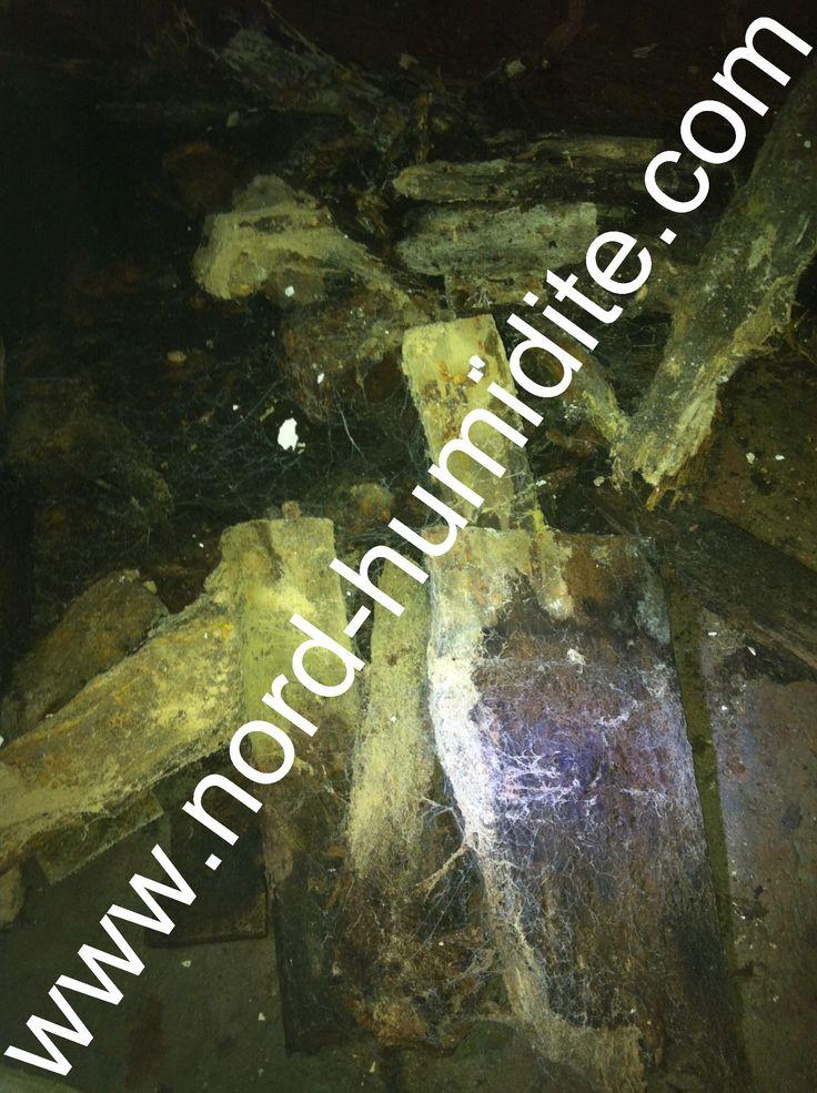 champignon cave humide ue18 jornalagora. Black Bedroom Furniture Sets. Home Design Ideas