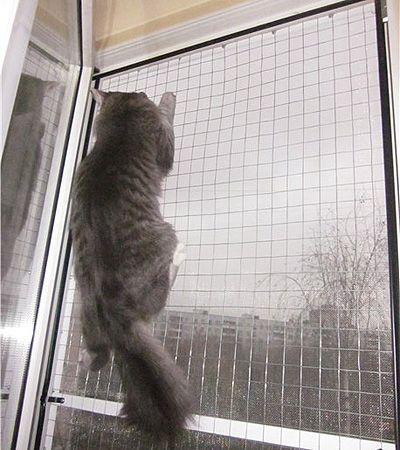 Заказать сетки антикошка на окна