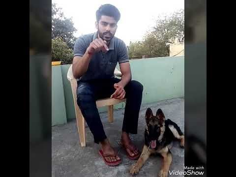 How To Teach Jump Command To Your Puppy In Hindi Hypoallergenic