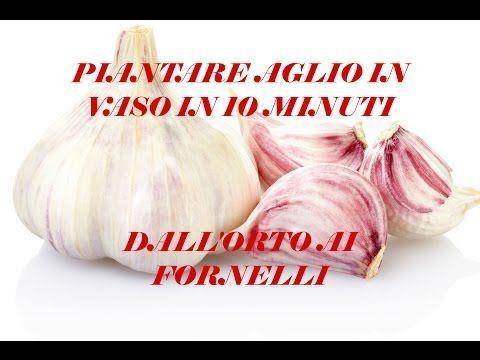 Piantare aglio in vaso in 10 minuti - Dall'Orto ai Fornelli - YouTube