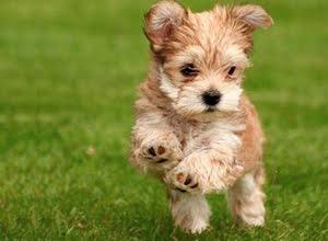 Cute puppy * Animais fofos