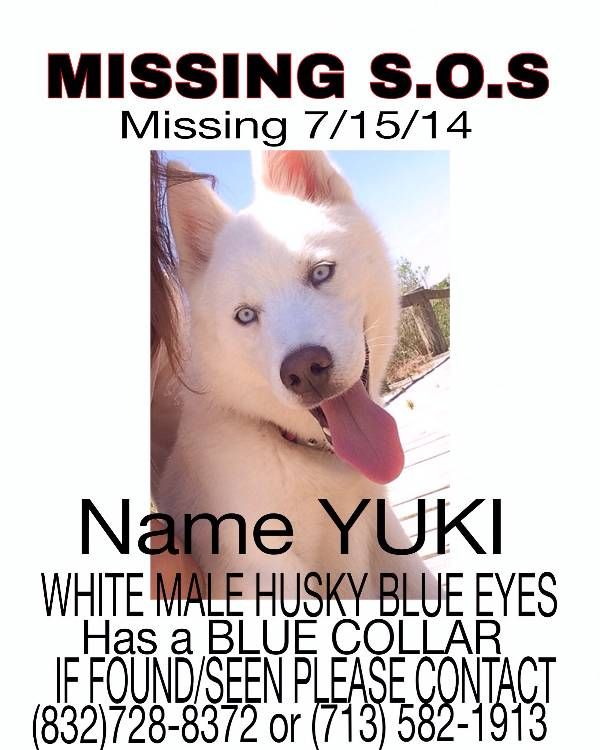 Lost Dog in #HOUSTON #TX 77089.   Stephanie Lost a White Siberian Husky male named Yuki on 7/16/14. **REWARD** Call (832) 728-8372.  http://www.lostmydoggie.com/details.cfm?petid=63146