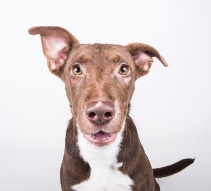 Dekalb County Dog Adoption