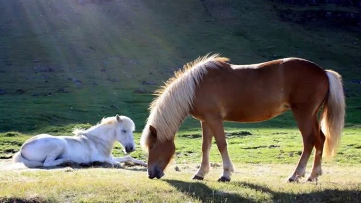 Wild Horses  ♥ Indian relaxation music  ♥ Sleep ♥ Brain music ♥ Meditati...