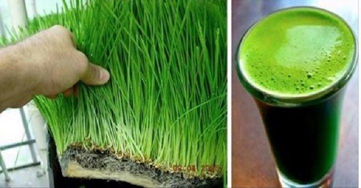 """Este suco é um coquetel de vitaminas, minerais e clorofila.Ele é muito forte e, por isso, nutre e desintoxica ao mesmo tempo.O ingrediente-chave deste suco é a """"grama"""" do trigo."""