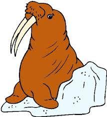 Afbeeldingsresultaat voor walrus plaatje