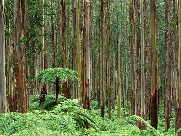 dandenong_ranges_national_park__australia.jpg (1024×768)