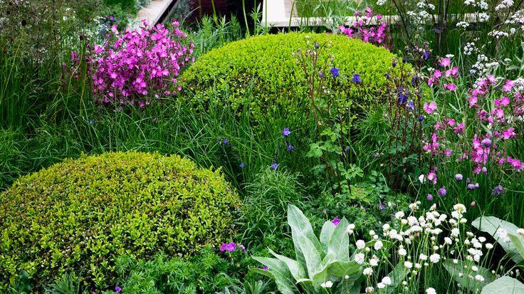 ber ideen zu hecke schneiden auf pinterest hecke pflanzen immergr ne hecke und str ucher. Black Bedroom Furniture Sets. Home Design Ideas