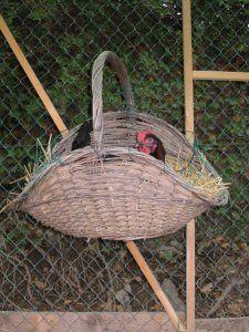 Gallinette® Elevage de poules et d'animaux de basse-cour - Construire des pondoirs