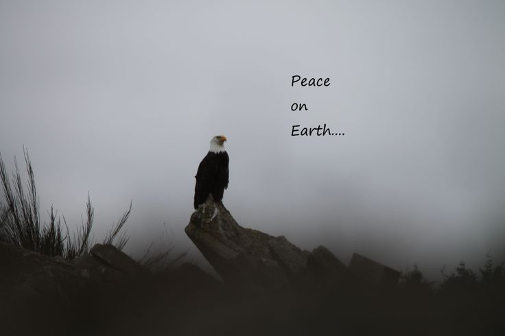 http://shyeanne.hubpages.com/hub/What-Does-Christmas-Look-Like-To-You Peace on Earth