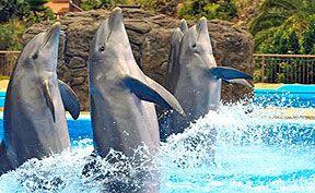 Dolphin Show Palmitos Park