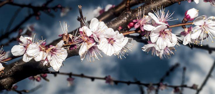Accenni di primavera photo by Morgan Capasso