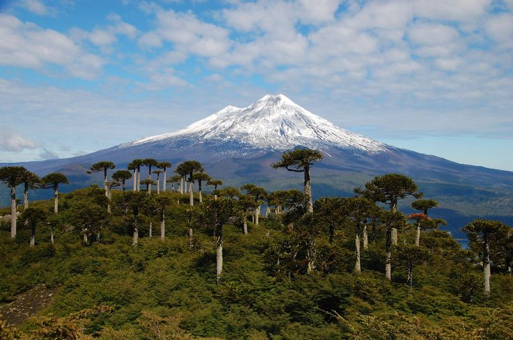 Chile's Conguillío National Park is well known for its extensive Araucaria forest, and the impending Llaima Volcano. This surreal place has an almost prehistoric feel about it, so much that the park was actually used as the filming location for Walking with Dinosaurs, a BBC television series. Photo taken on March 7, 2013 by Davide Zanchettin www.flickr.com/photos/davidesphotos/8750410272