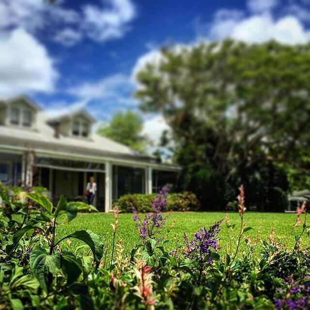 A beautiful summer day at Spicers Clovelly Estate #spicersretreats #spicersclovellyestate