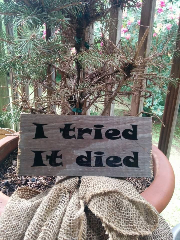 """Rustic Funny Quote Garden Sign """"I Tried It Died"""""""