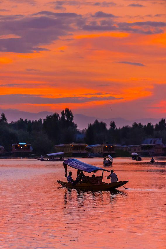 Shikaras (boats) on Dal Lake at sunset in Srinagar, Kashmir, Jammu and Kashmir State, India.