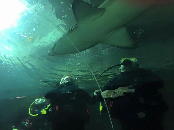 Just a Sunday afternoon diving with sharks!! :/