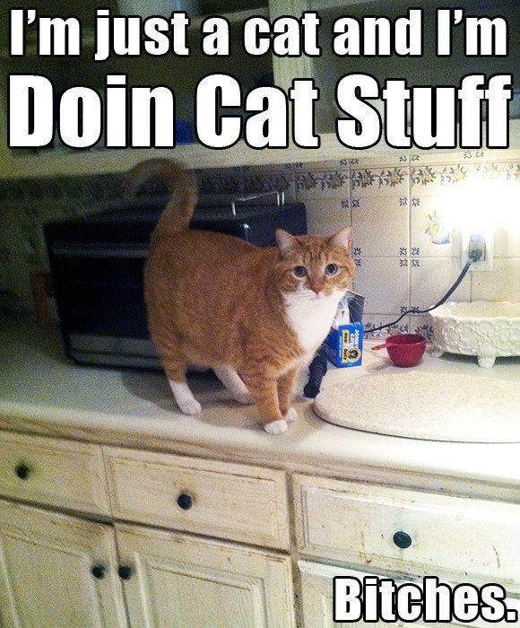 Funny Cat Lady Meme : Best images about crazy cat lady on pinterest dragon
