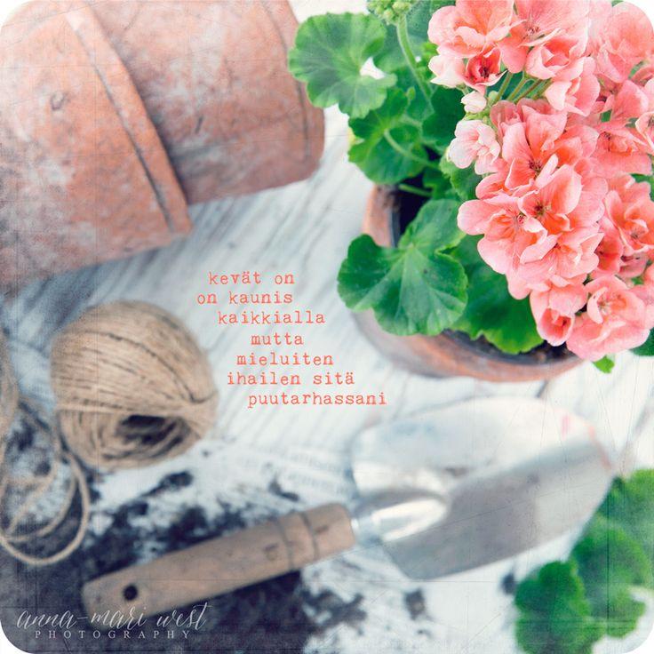 Kortti; pelargoniat | Anna-Mari West Photography