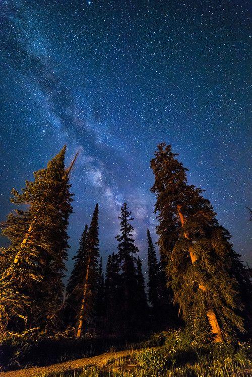 отношении фото звездного неба в лесу природе