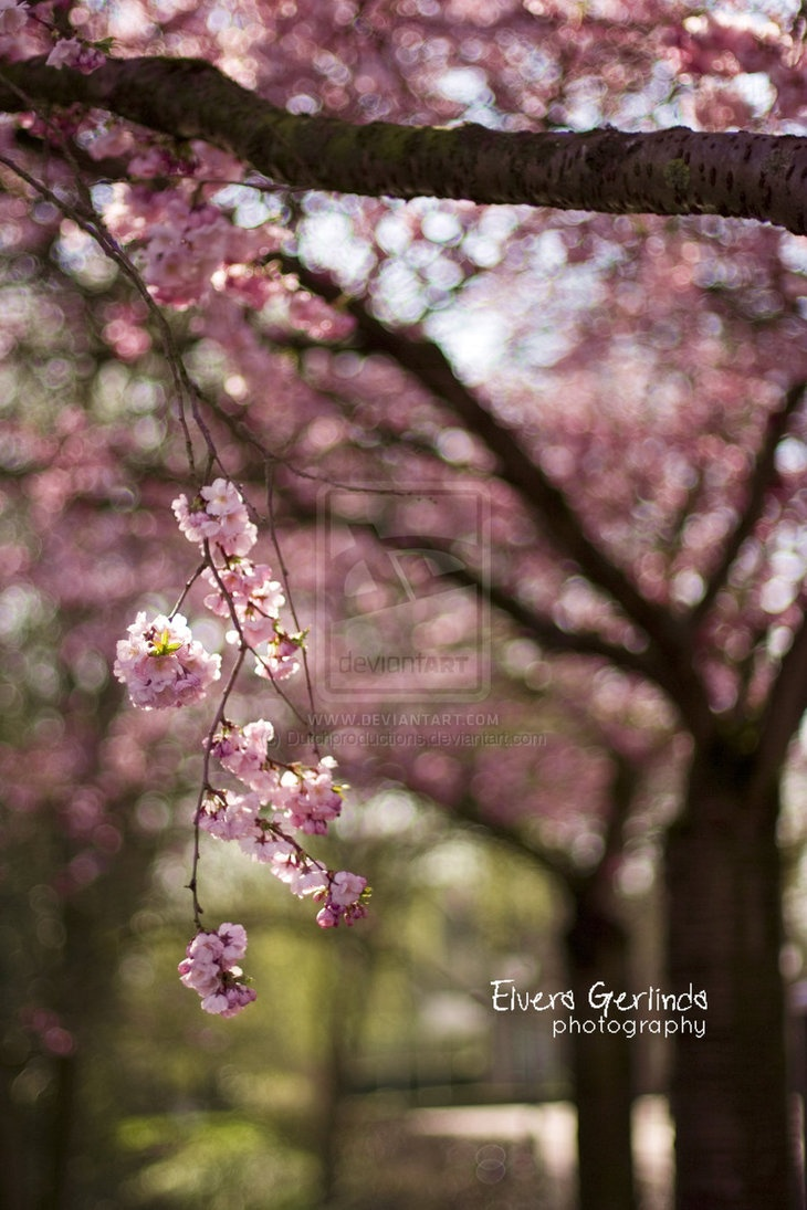 Spring bokeh  by ~Dutchproductions