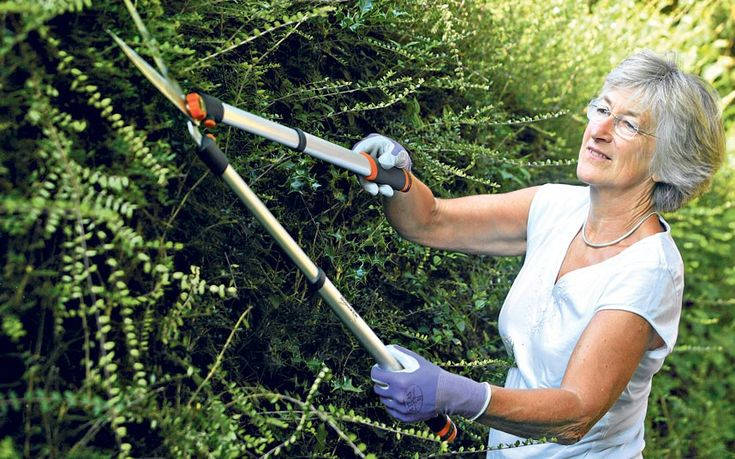 Helen Yemm answers your gardening questions. This week: pruning tips   and guarding walnuts