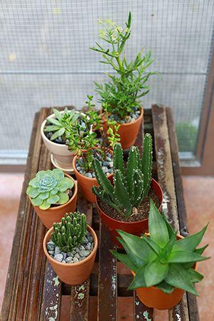 19 best Happy Gardens images on Pinterest | Philippines, Gardening ...