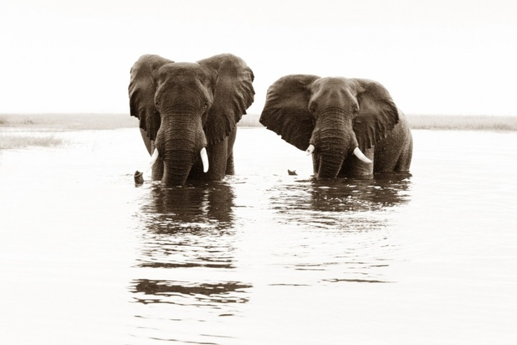 Two elephants standing in the water in Namibia