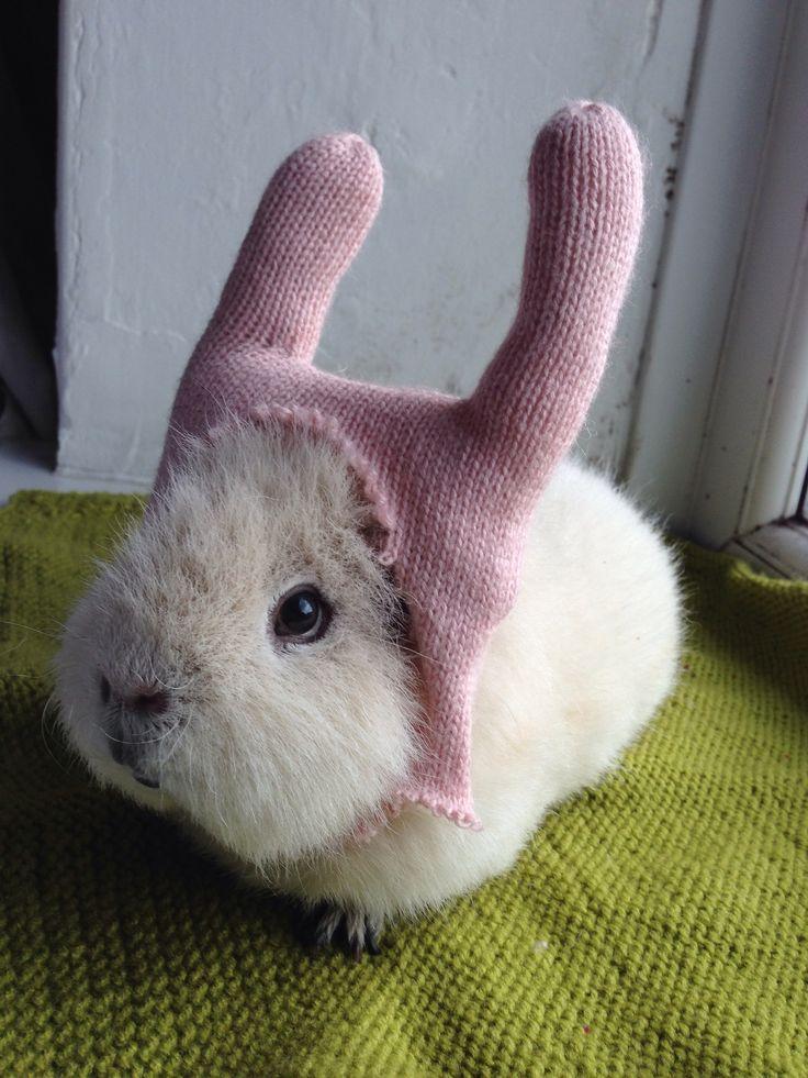 Want A Guinea Rabbit Digital Spy
