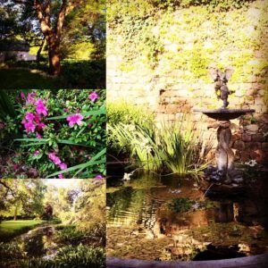 Rustenberg's annual open gardens - an opportunity to see one of the most beautiful private Manor House gardens, buy some plants to re-create your own, and have tea and scones under the lawn. Paradise!