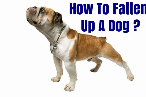 If you own a dog, you are bound to notice a few changes with it in terms of weight. Yes, it is possible for the dogs to end up being underweight if it is not eating right. So, why would you want to fatten up your dog?