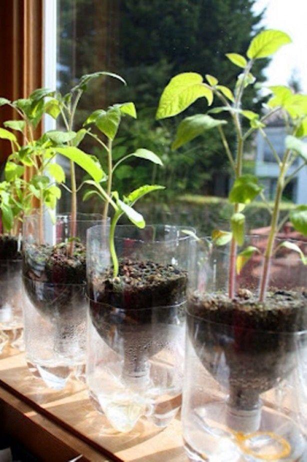 Petflessen doorgezaagd voor kleine plantjes