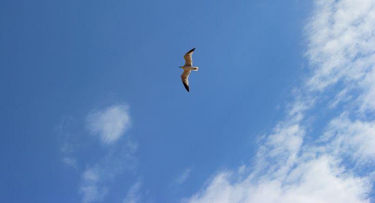 Seagull / Mewa http://praktycznyprzewodnik.blogspot.com/2014/08/pogoda-na-dlugi-weekend-sierpniowy-2014.html