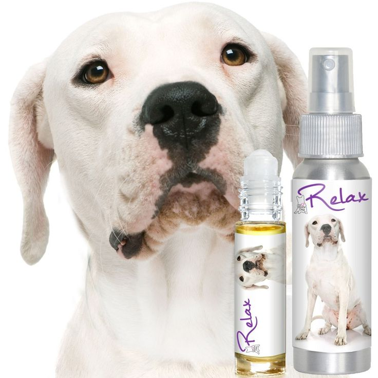 DOGO ARGENTINO RELAX DOG AROMATHERAPY