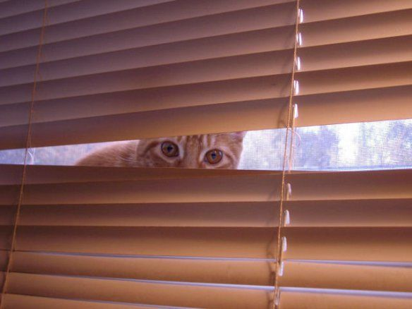 I see you.....The World's Top 10 Best Images of Creepy Cats