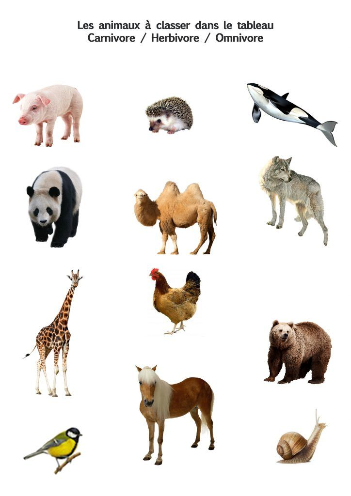 Autour Des Animaux Les Activites De Maman Animaux Herbivores Animaux Classification Des Animaux