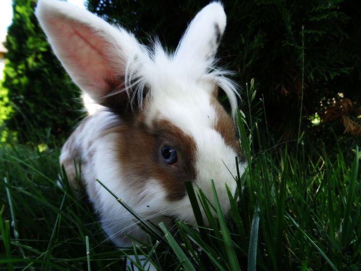 Scai, the bunny