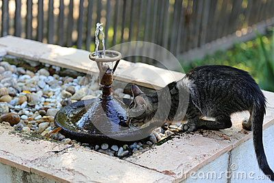 Kitty drinking water from edge of fountain.