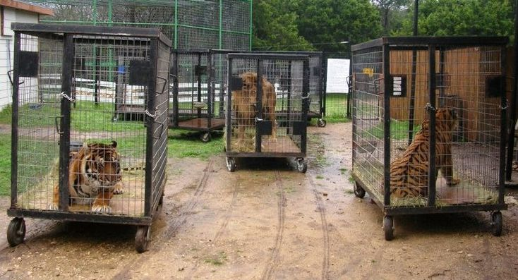 They cannot cope with animals-Facts about circuses
