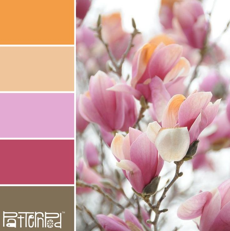 In Bloom #patternpod #patternpodcolor #color #colorpalettes